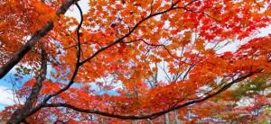 Selling Your Denver Home in the Fall